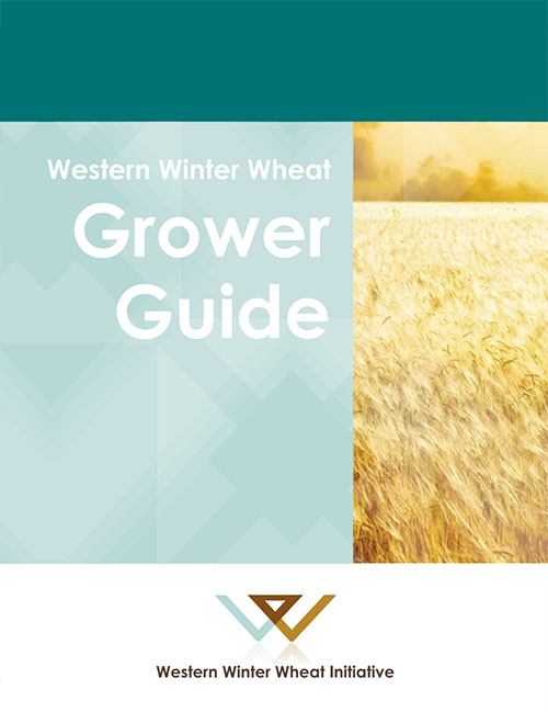 Why Grow Winter Wheat